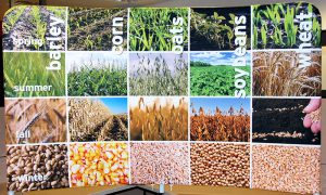 tabletop display with photos of grains at different seasons